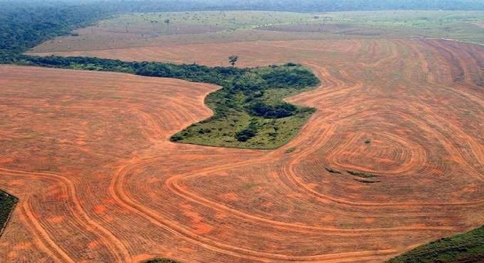defrisarile in Amazon continua