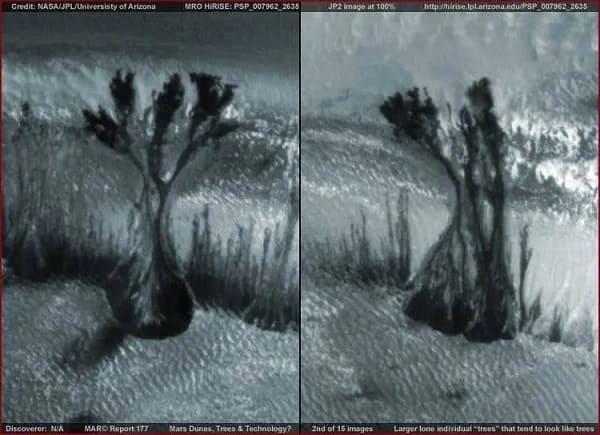 copaci pe marte