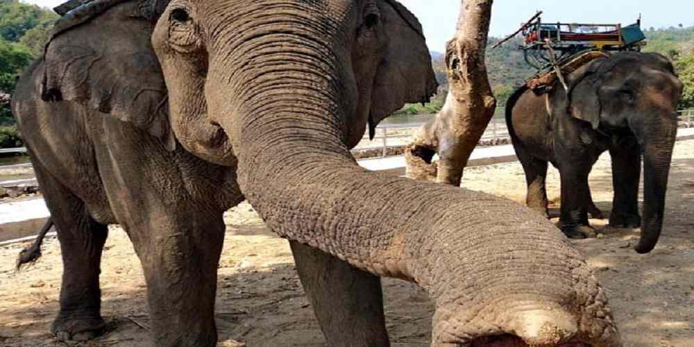 apa si alimentele aspirate de un elefant prin trompa