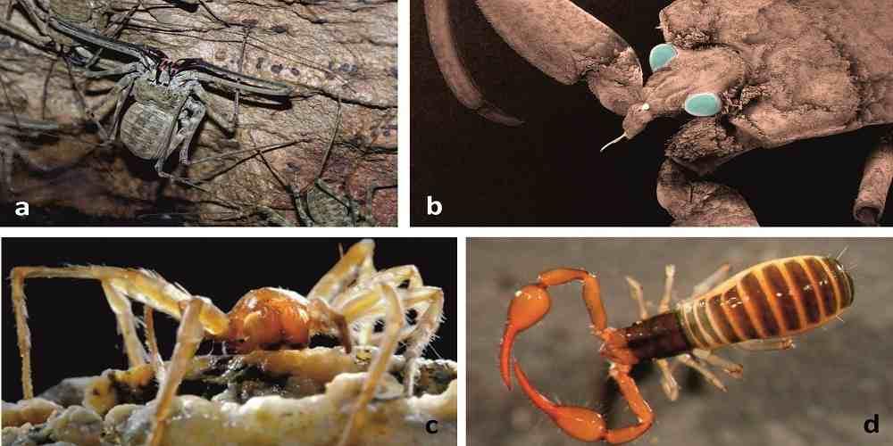 pestera din romania sigilata de 5 milioane de ani in care se ascund nevertebrate