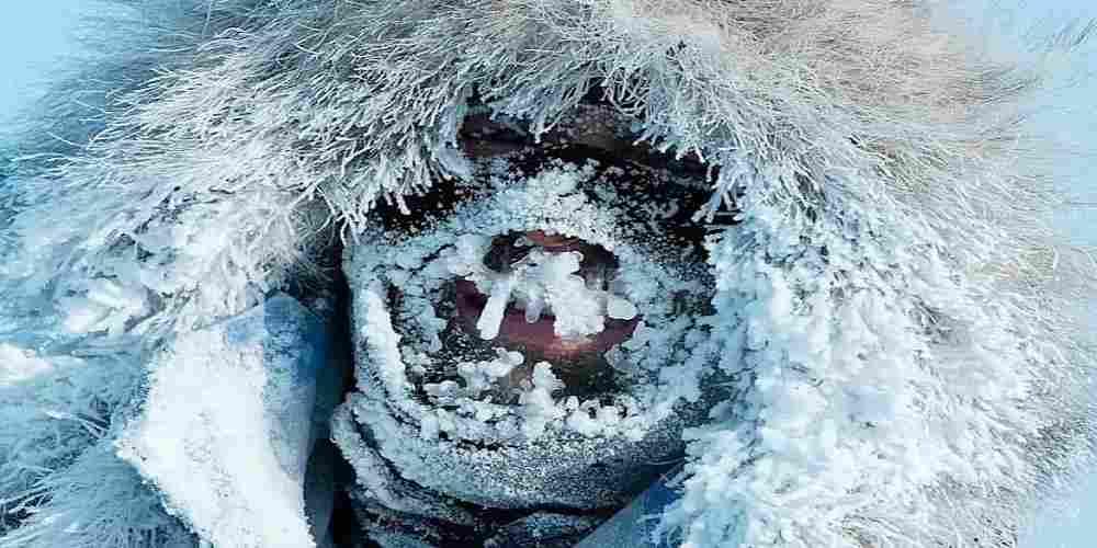 Antarctica, cele mai mici temperaturi din istorie