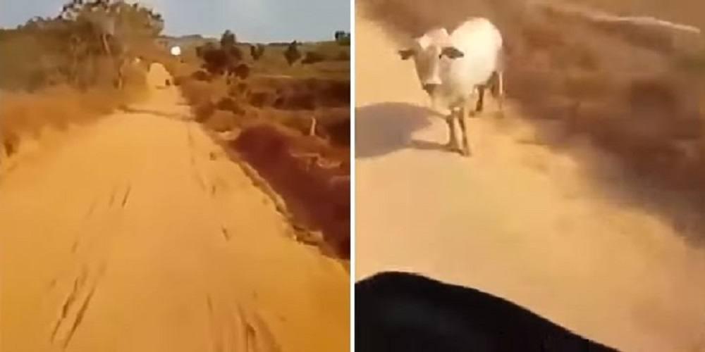 un ozn a incercat sa rapeasca un vitel